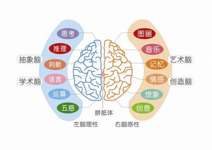 关于智商和左右脑的知识 - left right b