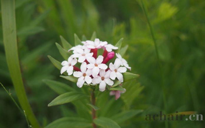 八大恩不能忘 - flower