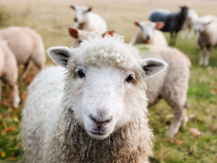 """分享经验:如何""""薅""""百度推广的""""羊毛""""? - haoyangmao"""